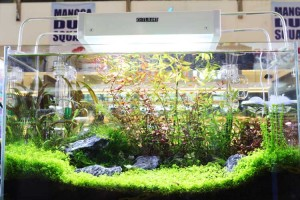 aquascaping4