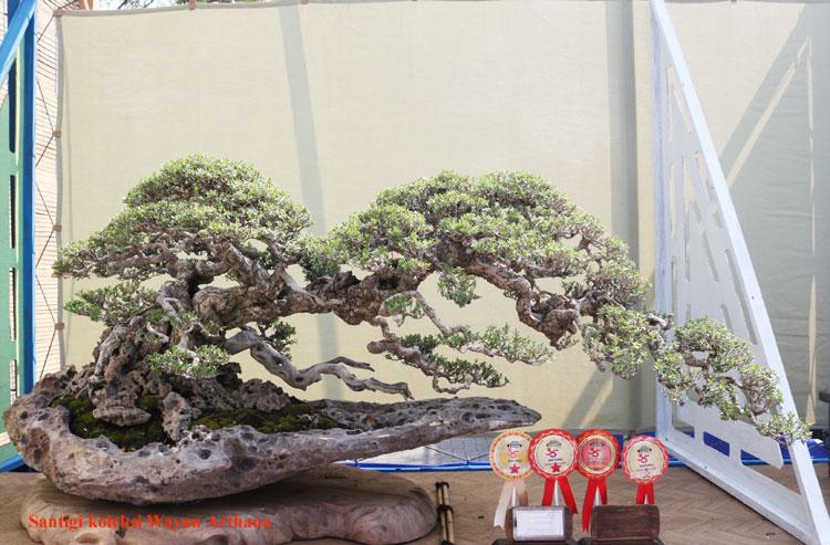 Grand Indonesian Bonsai Suiseki Exhibition 2014 1 Bebeja Com