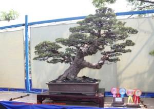 bonsai4