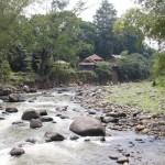 Tebar Ikan Sungai Ciliwung