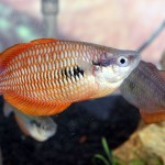 Selamat Ikan Pelangi Papua