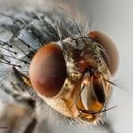 Fakta Ilmiah Kantung Air Pengusir Lalat