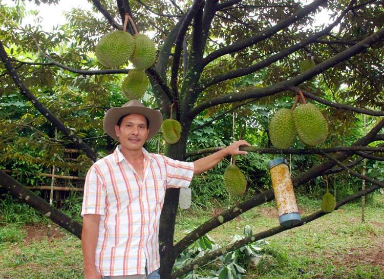 durian-d-101