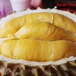 8 Durian Unggul Negeri Jiran