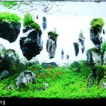 Baru: Floating Rocks Aquascaping