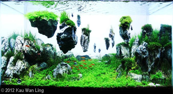 Floating Rocks Aquascaping Bebeja Com