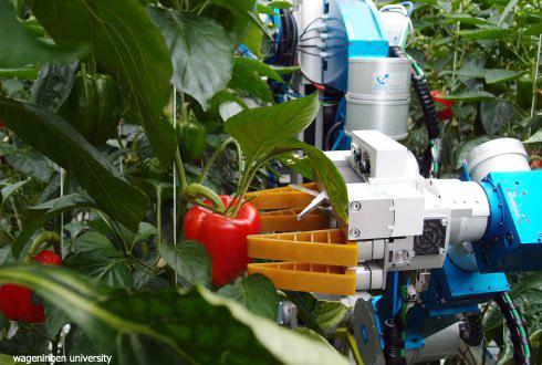 robot-paprika