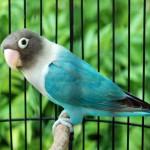 Nutrisi Spesial Burung Kicauan