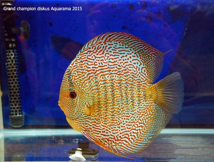 aquarama2