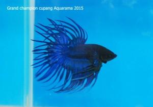 aquarama4