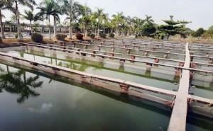saigon-aquarium1