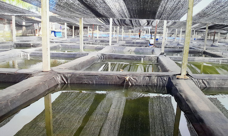saigon-aquarium2