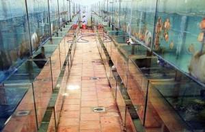 saigon-aquarium5