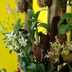 Bambu Untuk Anggrek