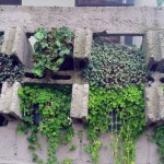Taman Di Dinding Batako