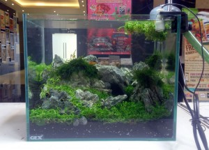 aquascape-live-setup1