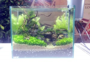 aquascape-live-setup13