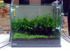 aquascape-live-setup3