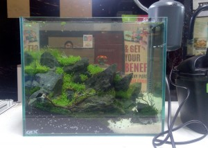 aquascape-live-setup4