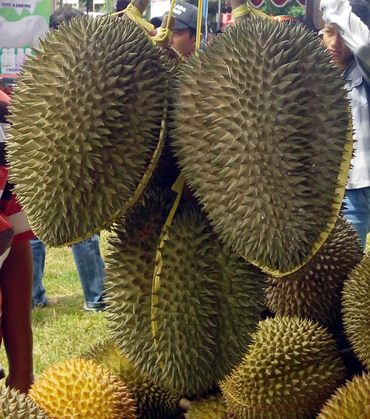 durian-brongkol
