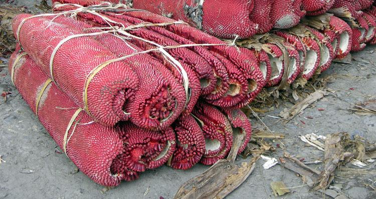 buah-merah