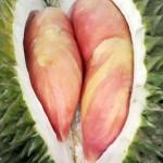 Ada Durian Merah Di Pesta Durian 2016