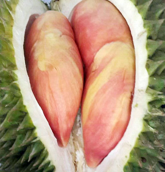 durian-merah1