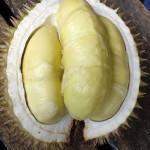 Pesta Durian 2016, Ada 14 Pedagang Top Durian