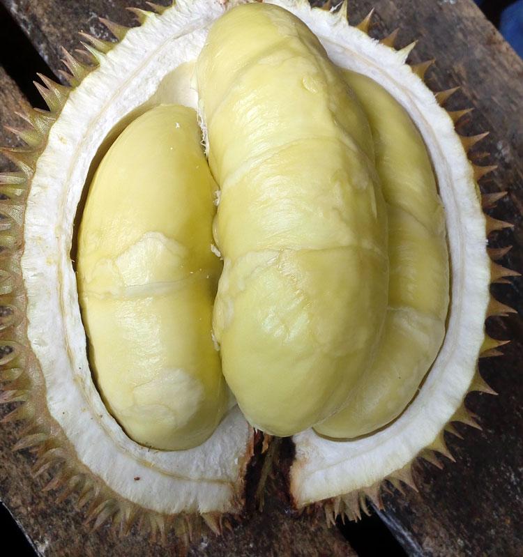 durian-pandeglang