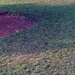 Rumput Gajah Mini Cegah Gulma