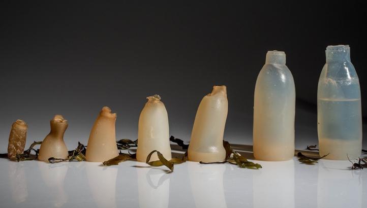 botol alga