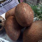 Aneka Buah Unik Pada Durian Fiesta 2016