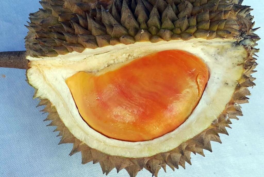 pesta-durian4