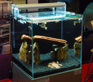 akuarium-guppy1