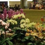 Bandara Changi Terbaik Dunia 2016