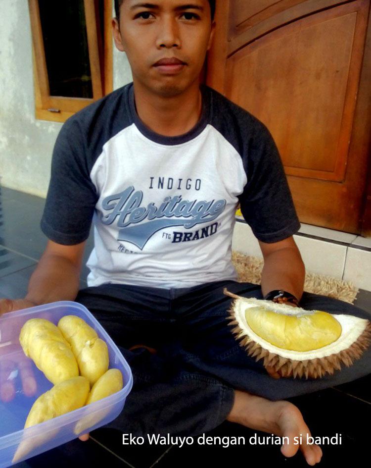 durian-banjarnegara1