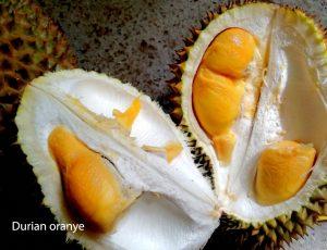 durian-banjarnegara2