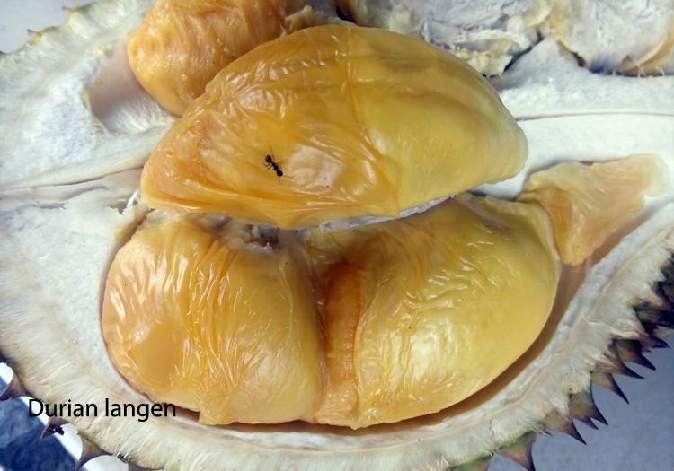 durian-banjarnegara3