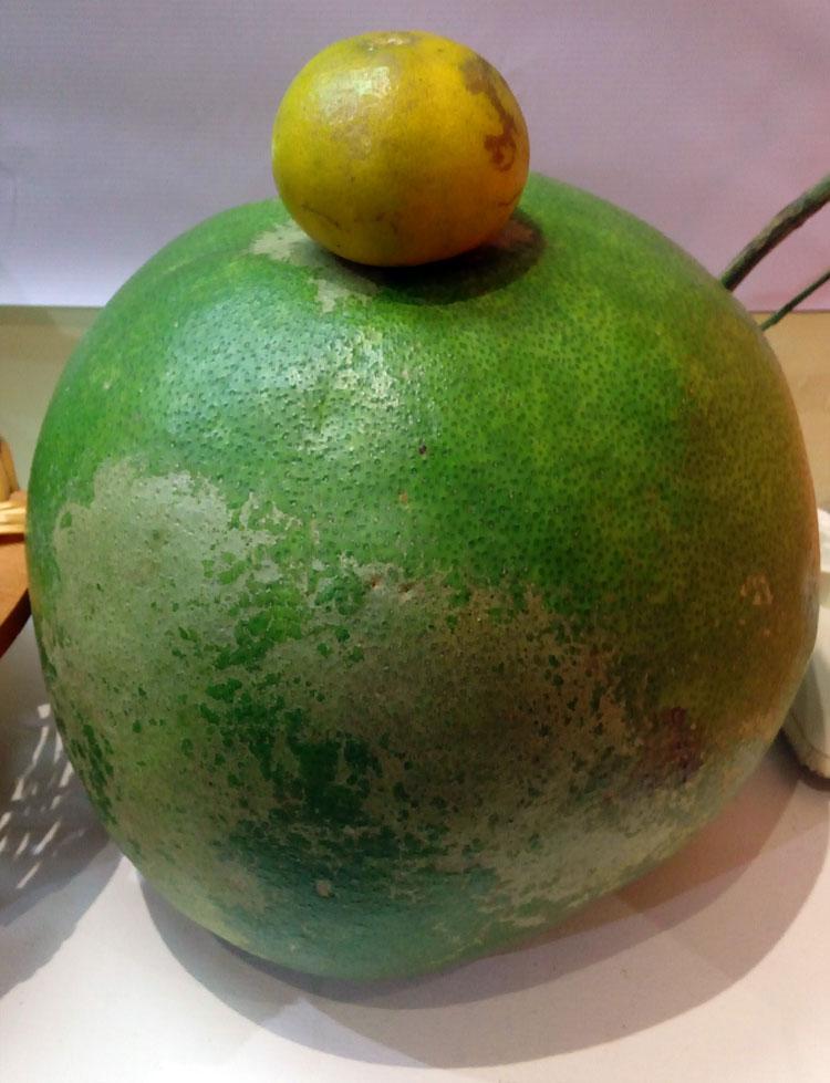 jeruk-pamelo