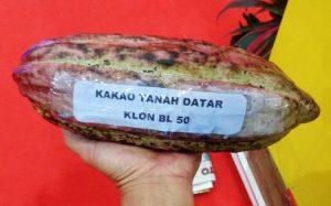 kakao-kabupaten-tanah-datar-klon-bl50