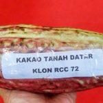 Sentra Kakao Di Kabupaten Tanah Datar