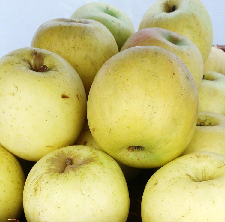 khasiat-kulit-apel
