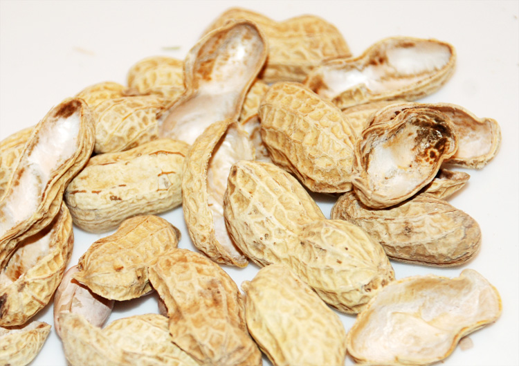 kulit-cangkang-kacang-tanah