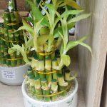 Aneka Liukan Batang Bambu Rejeki