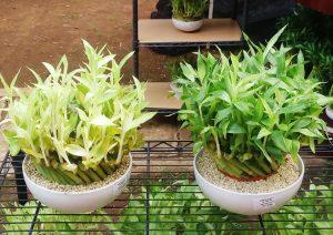 bambu-rejeki2