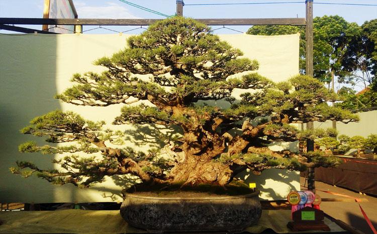 best-in-show-gebyar-bonsai-bandung-juara-2016-1