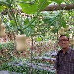 Budidaya Labu Butternut Squash