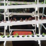 Instalasi Hidroponik (8): Aneka Model Staterkit NFT