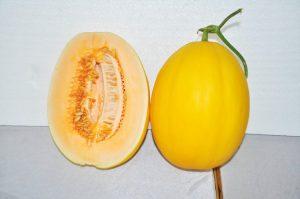 kontes-melon-2016-2