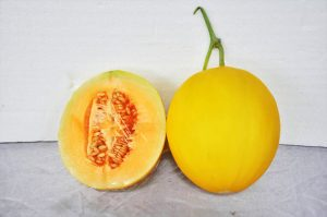 kontes-melon-2016-4